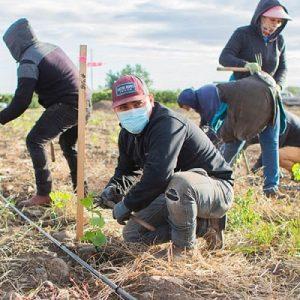 Vineyard Workers, Truth Teller Winery Spotlight